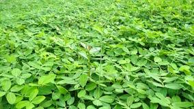 Groene grasuitgestrektheid in het park Groen grasdetail stock videobeelden