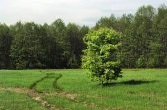 Groene grasweide Royalty-vrije Stock Foto