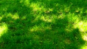 Groene grasweide, blauwe hemel en zonlicht in de zomer, aardachtergrond stock videobeelden