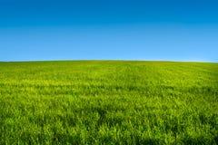 Groene grasweide met blauwe hemel r Royalty-vrije Stock Afbeeldingen