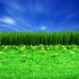 Groene gress en blauwe hemel Stock Afbeelding
