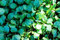 Groene Groente stock afbeeldingen
