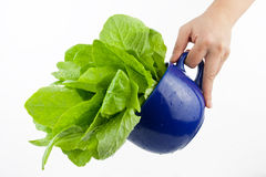 Groene groente Royalty-vrije Stock Foto's