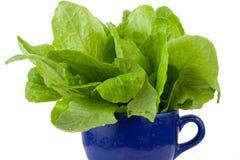 Groene groente Royalty-vrije Stock Afbeeldingen