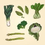 Groene Groenten Royalty-vrije Stock Afbeeldingen