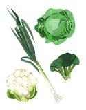 Groene Groenten Royalty-vrije Stock Afbeelding