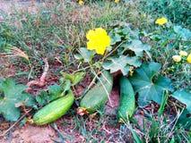 Groene groenten met gele bloemen stock afbeelding