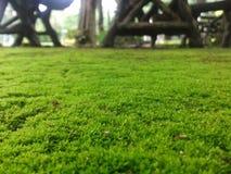 Groene grond Royalty-vrije Stock Foto's