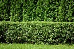 Groene haagachtergrond stock afbeeldingen