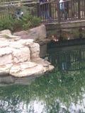 Groene haron en schildpad Royalty-vrije Stock Afbeelding