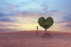 Groene hart gevormde boom stock foto