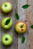 Groene heerlijke appel Stock Afbeelding