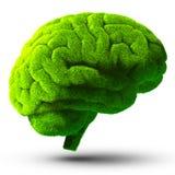 Groene hersenen Stock Afbeeldingen