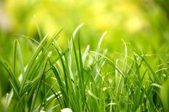 Groene het bladachtergrond van de grasinstallatie Royalty-vrije Stock Foto