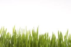 Groene het grasachtergrond van de lente. Royalty-vrije Stock Foto's