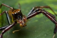 Groene het springen spin Royalty-vrije Stock Foto