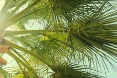 Groene het uitspreiden zich takken van palmen tegen de blauwe hemel De zomerfoto met gloed royalty-vrije stock foto's