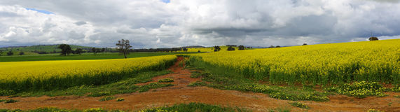 Groene heuvels, gouden gewassen en rode aarde Royalty-vrije Stock Foto's