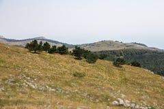 Groene heuvels met bomen Royalty-vrije Stock Foto's