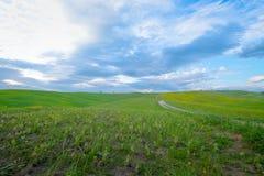 Groene heuvels met cipressen en groene weiden in Val D ?Orcia, Toscani?, Itali? royalty-vrije stock fotografie