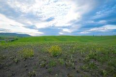 Groene heuvels met cipressen en groene weiden in Val D ?Orcia, Toscani?, Itali? royalty-vrije stock afbeelding