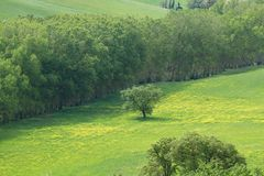 Groene heuvels met cipressen en groene weiden in Val D ?Orcia, Toscani?, Itali? stock fotografie
