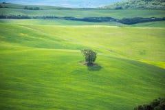 Groene heuvels met groene weiden in Val D ?Orcia, Toscani? royalty-vrije stock foto's