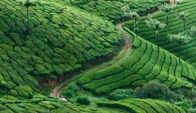 Groene heuvels van theeaanplantingen in Munnar Stock Foto
