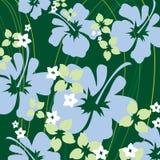 Groene hibiscus Stock Foto's