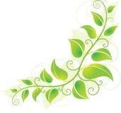 Groene hoekwijnstok stock illustratie