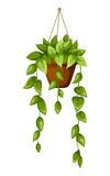 Groene houseplant in een pot Vector illustratie Stock Afbeelding