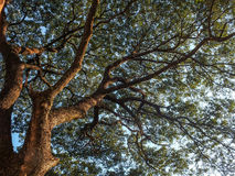Groene houten het zonlichtachtergronden van de aard Royalty-vrije Stock Foto's