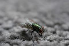 Groene Huisvlieg op Gray Carpet stock afbeeldingen