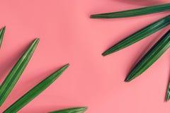 Groene Ieaf-achtergrond rond op roze pastelkleur met ruimte, Vi Stock Foto's