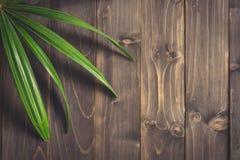 Groene Ieaf-achtergrond rond oud hout met ruimte, gestemde Wijnoogst Royalty-vrije Stock Afbeelding