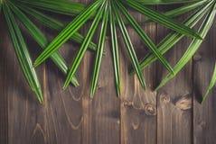 Groene Ieaf-achtergrond rond oud hout met ruimte, gestemde Wijnoogst Royalty-vrije Stock Fotografie