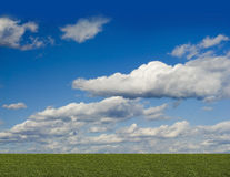Groene ingediende, blauwe hemel, witte wolk Stock Foto