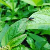 Groene insecten Stock Afbeeldingen