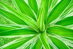 Groene Installatie Stock Fotografie