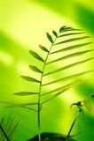 Groene installatie Royalty-vrije Stock Foto's