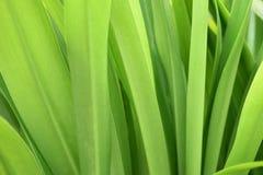 Groene installatie Royalty-vrije Stock Afbeeldingen