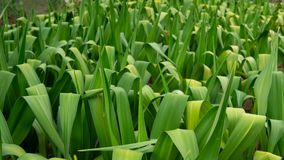 Groene installatie in de botanische tuin dichtbij meer stock afbeelding
