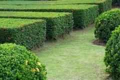 Groene installatie in de tuin Stock Afbeelding