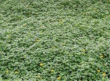 Groene installatie en gele bloemenachtergrond Royalty-vrije Stock Afbeelding