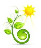 Groene installatie en zon stock illustratie