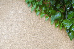 Groene installatie het groeien op muur royalty-vrije stock afbeeldingen