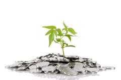 Groene installatie het groeien van de muntstukken Royalty-vrije Stock Afbeeldingen