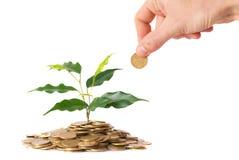 Groene installatie het groeien van de muntstukken Stock Afbeeldingen