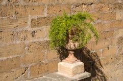 Groene installatie met een oude muur als achtergrond Royalty-vrije Stock Foto