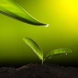 Groene installatie met waterdaling Royalty-vrije Stock Afbeelding
